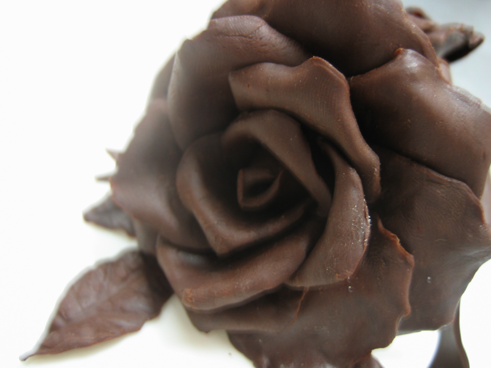 MP Frederick : Chocolate Rose